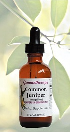 Gemmotherapy common juniper