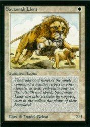 サバンナ・ライオン/Savannah Lions  (IE)