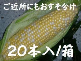 �ϡ���ˡ����祳�� 20��