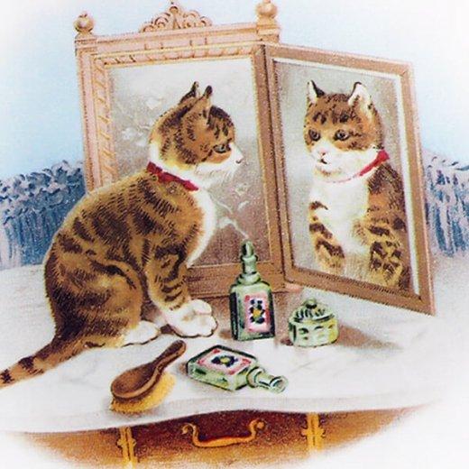 フランス ポストカード 猫 キャット (miroir)【画像3】