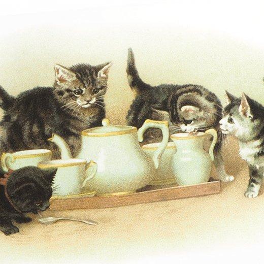 フランス ポストカード 猫 キャット (lait)【画像3】