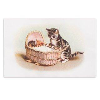 動物 アニマル柄 フランス ポストカード 猫 キャット (lit d'enfant)