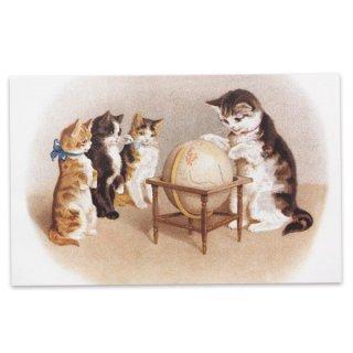 動物 アニマル柄 フランス ポストカード 猫 キャット (un globe terrestre)