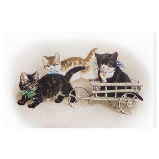 動物 アニマル柄 フランス ポストカード 猫 キャット (Bogie)