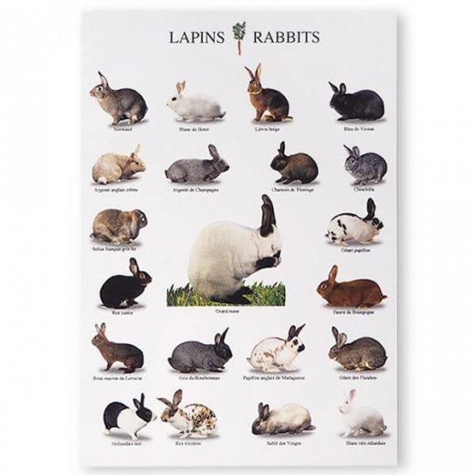 フランス ポストカード(LAPINS RABBITS)