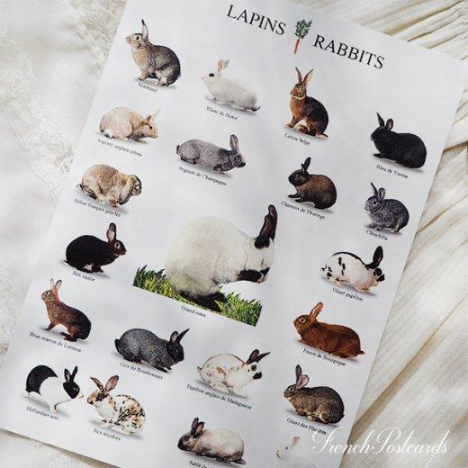 フランス ポストカード(LAPINS RABBITS)【画像4】