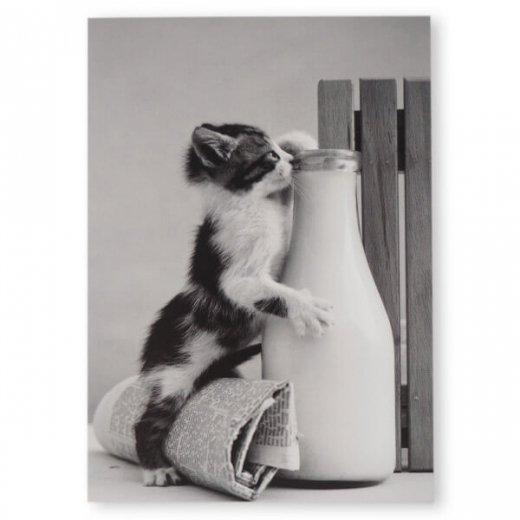ネコ モノクロ ポストカード (Kitten drinking milk)