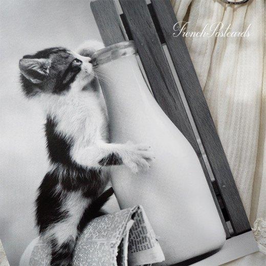 ネコ モノクロ ポストカード (Kitten drinking milk)【画像5】