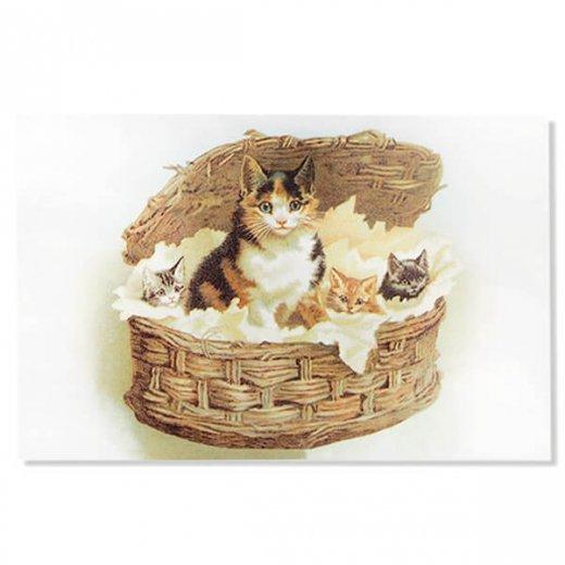 フランス ポストカード 猫 キャット  (lit d'enfant B)