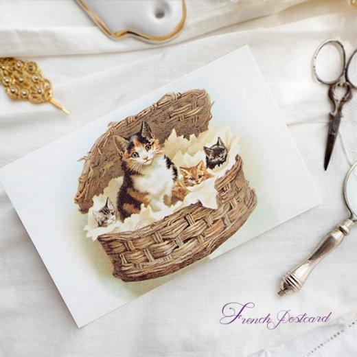 フランス ポストカード 猫 キャット  (lit d'enfant B)【画像5】
