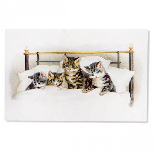 フランス ポストカード 猫 キャット  (bonne nuit)