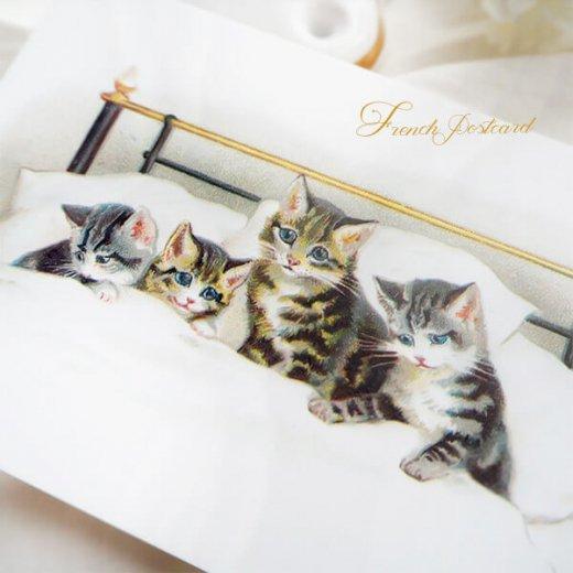 フランス ポストカード 猫 キャット  (bonne nuit)【画像2】