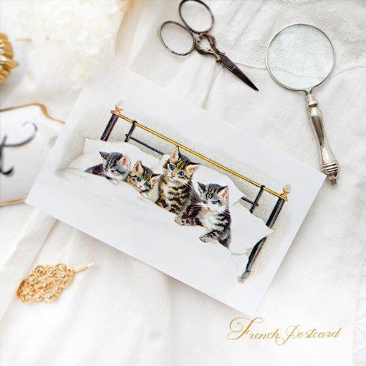 フランス ポストカード 猫 キャット  (bonne nuit)【画像3】