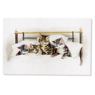動物 アニマル柄 フランス ポストカード 猫 キャット  (bonne nuit)