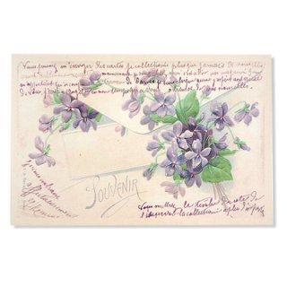 フランス ポストカード スミレ  封筒【enveloppe】