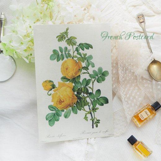 ルドゥーテ バラ図鑑 ポストカード  (Rosa Sulfurea)ボタニカルアート【画像7】