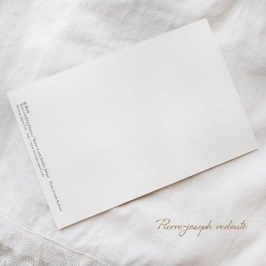ルドゥーテ バラ図鑑 ポストカード  (Rosa Sulfurea)ボタニカルアート【画像8】