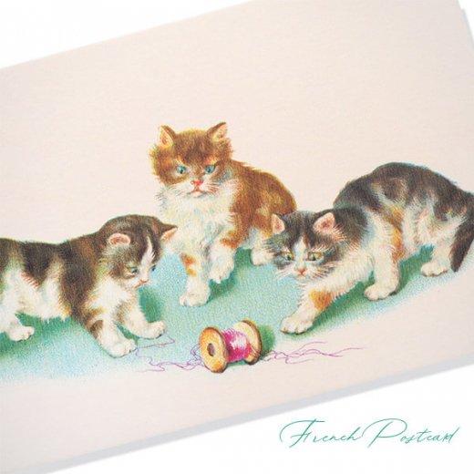 フランス ポストカード  (Vilain chat いたずら猫 子猫)【画像2】