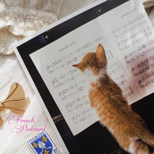 ネコ ポストカード  ピアノ 譜面 猫(Cat and piano)【画像2】