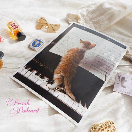 ネコ ポストカード  ピアノ 譜面 猫(Cat and piano)【画像3】
