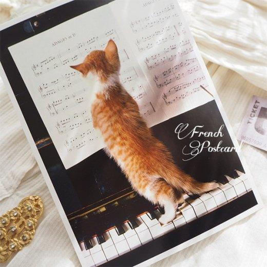 ネコ ポストカード  ピアノ 譜面 猫(Cat and piano)【画像5】