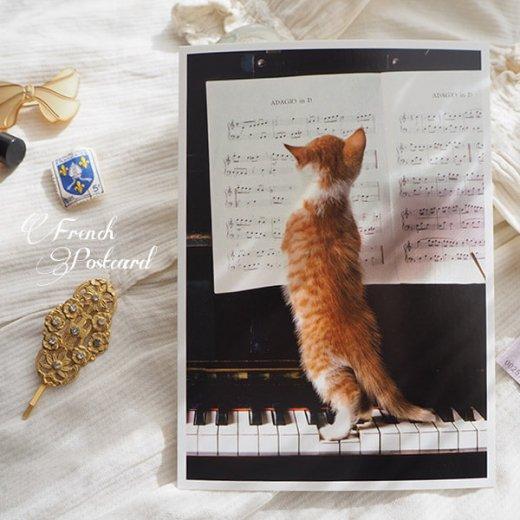 ネコ ポストカード  ピアノ 譜面 猫(Cat and piano)【画像6】