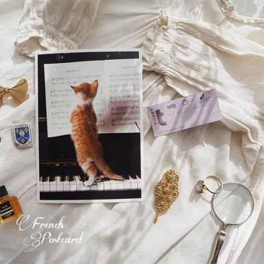 ネコ ポストカード  ピアノ 譜面 猫(Cat and piano)【画像7】