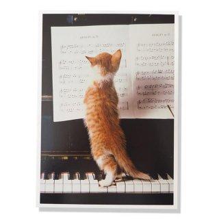 ネコ ポストカード  ピアノ 譜面 猫(Cat and piano)