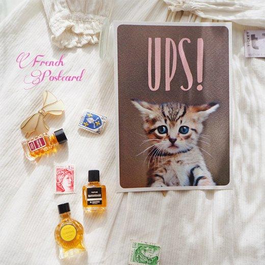 ネコ ポストカード (UPS!)【画像6】
