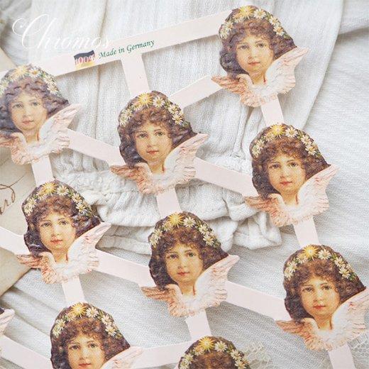 ドイツ クロモス【M】天使 デイジー・ピンク (B-type) 【画像6】
