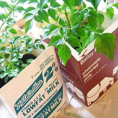 1960年代 デッドストック パッケージ (チョコミルク)【画像4】