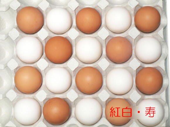 紅白・寿 40個入り (送料込み)