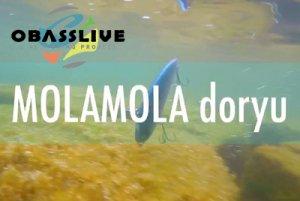 OBASSLIVE/ MOLAMOLA doryu spec