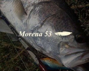 ボンバダアグア/モレーナ 53