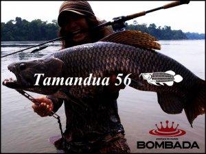 ボンバダアグア/タマンドア 56