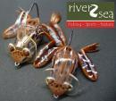 river2sea/ダイバーフロッグ Jr.