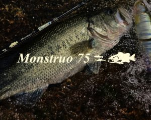 TULALA/ Monstruo 75 モンストロ 75