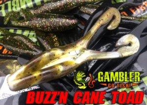 GAMBLER/BUZZ'N CANE TOAD