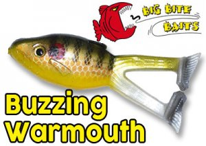 BIG BITE BAITS/Buzzing War Mouth