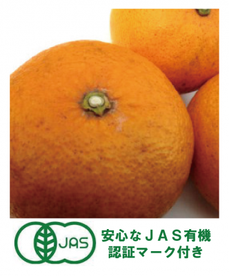 九州直送便【JAS有機】オーガニック 甘夏5kg 熊本産(2月−4月)