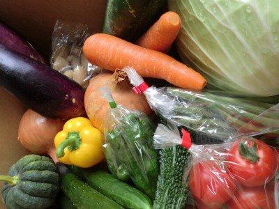 九州産野菜・直送『農薬に頼らない栽培から生まれた清和野菜詰合せ9種類(+1種・計10種)』