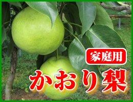【数量限定】【10月上旬発送予定】超大玉 かおり梨 家庭用約5kg(約10〜14玉)