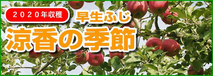 【10月上旬発送予定】早生ふじ 涼香の季節 贈答用10kg(約32〜36玉)02