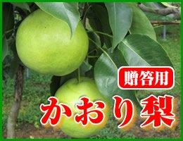 【数量限定】【10月上旬発送予定】超大玉 かおり梨 贈答用約5kg(約10〜14玉)