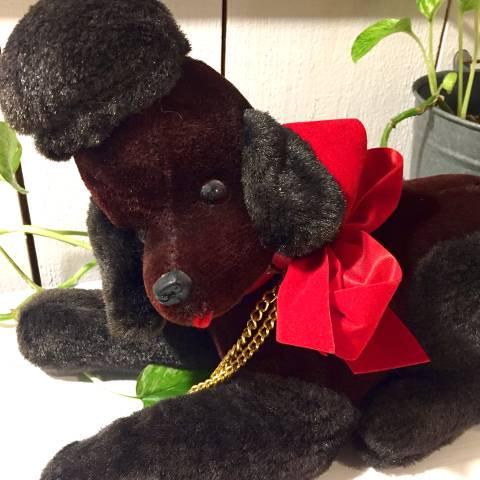 Black Poodle Radio