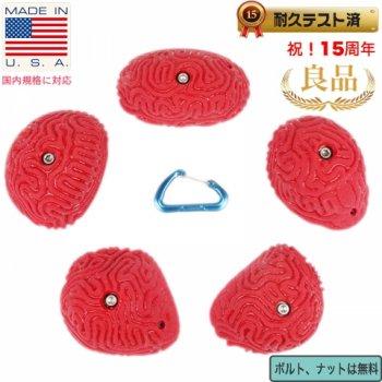 【Boltタイプ】5 XL ブレイン コーラル スローパー Set #2  /  5 XL Brain Coral Slopers Set #2 クライミングホールド