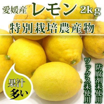 特裁レモン