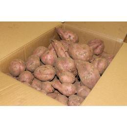 ★品切れ中★ 有機 種子島の安納いもの規格外品    2キロ  ※3月入荷予定