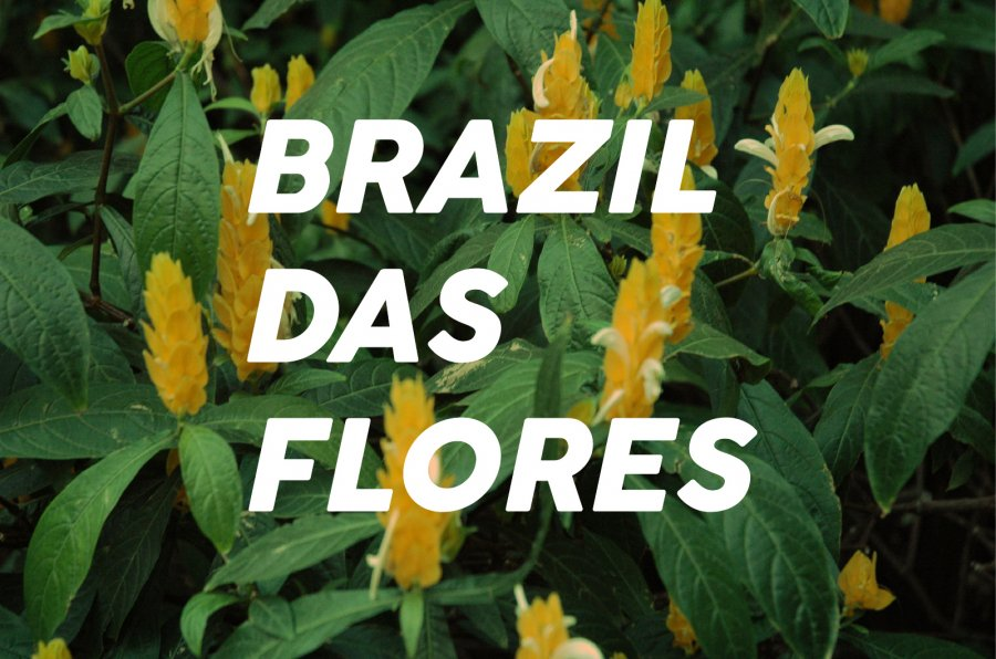 100g Brazil Das-Flores<br>(中煎り)<img class='new_mark_img2' src='https://img.shop-pro.jp/img/new/icons47.gif' style='border:none;display:inline;margin:0px;padding:0px;width:auto;' />