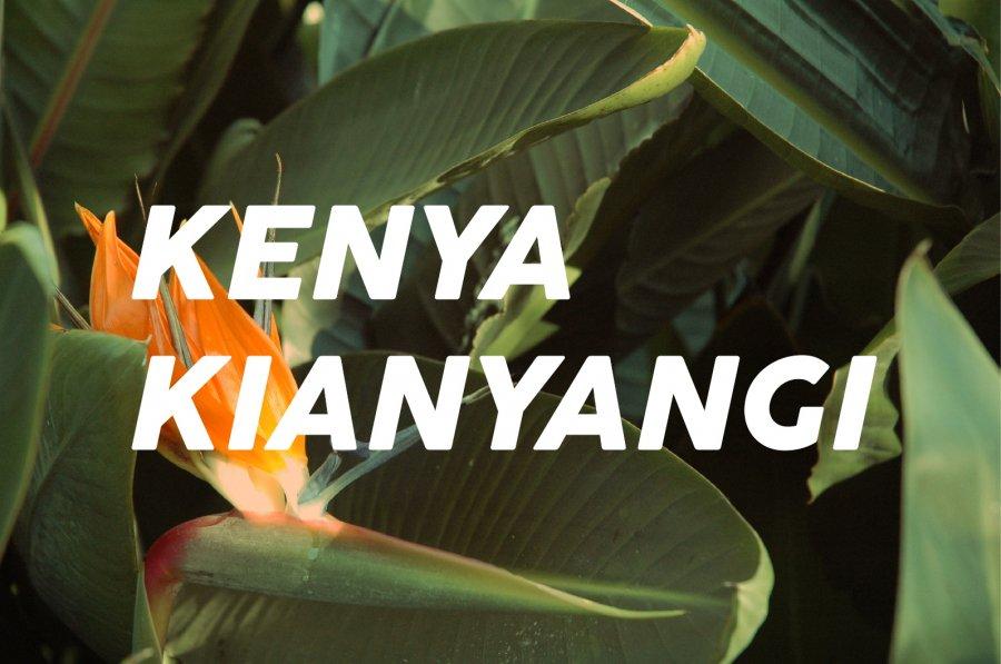 200g Kenya Kiandu(中煎り)